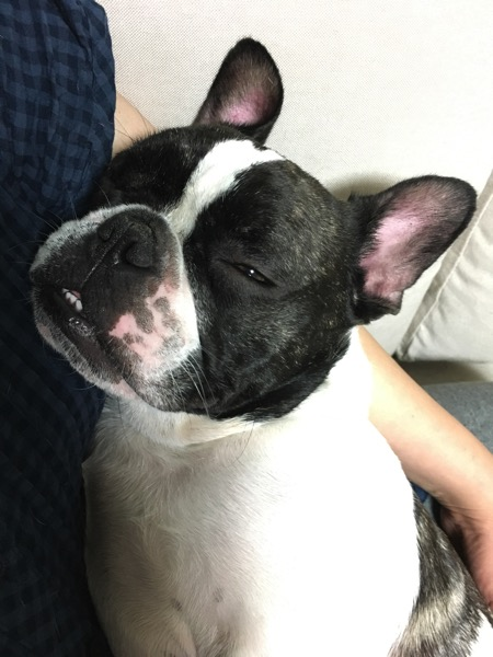 お母さんに抱っこされて眠るウメ