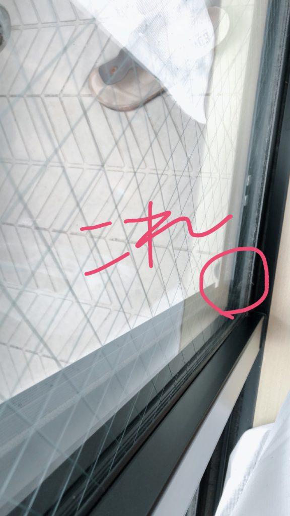 窓とふすまの隙間にカメムシがいる画像
